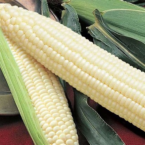 CORN from Westernview